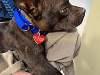 My story Frannie is a young French bulldog mix who has