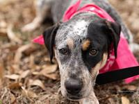 Freckles's story Opt to Adopt! and give me a chance to