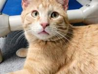 Freckles's story Want to meet the most playful, goofy,