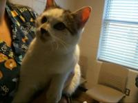 FRECKLES's story I am available for adoption at