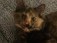 My story Freckles is loving medium haired tortie,