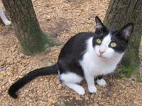 Darling Fred is an experienced house cat whose owner