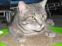 FRED's story Fred is a friendly gray tabby male who's