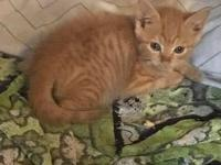 Fred (Weasley Litter)'s story Hi - My name is Fred and