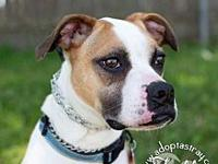 Freddie's story Hey boxer lovers out there meet