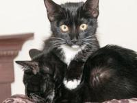 Freddie's story This sweet tuxedo boy is ready for