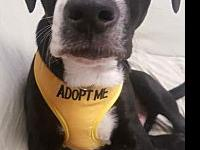 Freddie (Skipper)'s story All adoptions are $200 per