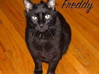 Freddy- At Adoption Center's story FOSTERED IN: