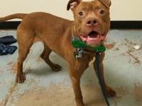 Freddy's story !!! AVAILABLE for Adoption at ACCT