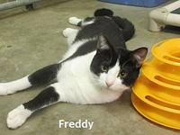 Freddy's story You can fill out an adoption application