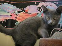Frederica's story Frederica is one super kitten. She