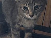 Fredinand's story Ferdinand is a very sweet kitten and