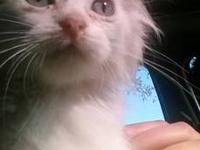 I have a 12 week old female kitten that needs a GOOD
