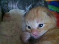 I have 2 orange tabby's and one gray stripped rag doll.