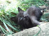 I have two black male kittens available, and they are