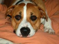 I have to rehome my sweet boxer mix Leo. REHOMING FEE,