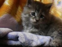 we have a charming little female kitten. she is lively,
