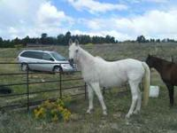 BEAUTIFUL ** FULLY REGISTERED ARABIAN, 25 YEAR OLD