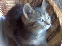 Free 3 Months Old Kittens 2 Boys 2 Girls Wormed,&
