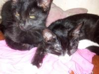 I have 2 kittens, both male and about 4months old. 2 of