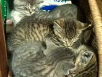 I have four kittens that need experienced, loving