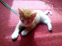 Free kittens I have 4 left 6wks old healthy and