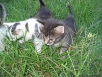 WE have 4 female kittens ready for their new home. 1 is