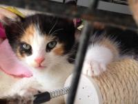 4 Female Kittens (approx. 6 weeks old) FREE to LOVING,