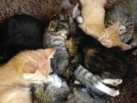 We have 7 playful 10 week old kittens. They are all on
