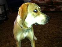 Rudy is a non-neutered approx. 10 month old male puppy.