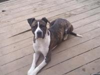 Free 3 year old male pit. He is good with children,