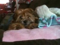 Names sasha she will be a year old in Feb. Great loving