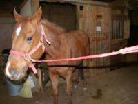 I have a 22-yr old Registered Hanoverian/TB mare that
