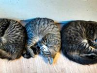 I have three adorable kittens that need experienced,