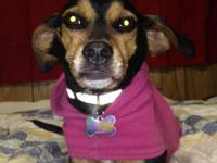 In need of a home for Terri mix female.  Spayed,