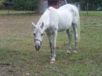 I have a 31 yr old mare. she if a purebreed Araibian