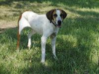3 year old make red bone hound in good health, up to