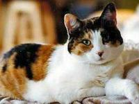 Bell is approximately 8 years old. Friendly and loves