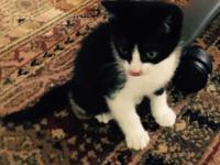 Free kittens, 7 wks old, very cute and playful. Call or