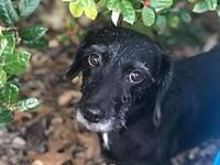 Freida's story Freida is approx. 5 yrs of age and