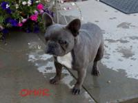Omar is a 2 yr old male he is neutered male and has his