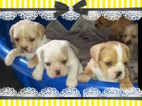 This is not a oops breeding. These adorable pups are