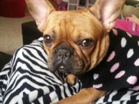 I'm very saddened to have to rehome our frenchie,