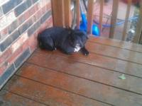 I have a female frenchie DOB is 5-1-2006 and she is AKC