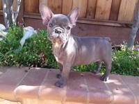 BLUE women new puppy is 10 weeks old. She is a AKC