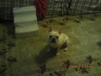 Sugar Bear is a very sweet little girl. She is looking