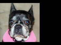 French Bulldog - Imogene - Small - Senior - Female -