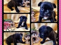 Male and female Frenchie pups avail. Ready to go May