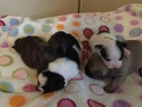 Hello everyone our Frenchie babies are now 3 weeks! We