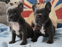 i we have for sale our 10 week old pups....they have